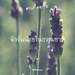 WILD-WRITE : จักจั่นน้อยในธรรมชาติ