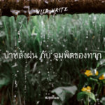 WILD-WRITE : ป่าหลังฝน กับ จุมพิตของทาก