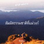 WILD-WRITE : สัมผัสธรรมชาติที่แม่วงก์