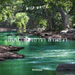 WILD-WRITE : สืบป่า ส่องธารา สานชีวา