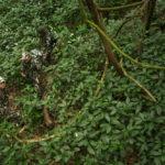 ข่าวสารแวดวงพิทักษ์ป่า ประจำเดือนกันยายน 2563