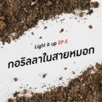 LIGHT IT UP EP 5 : กอริลลาในสายหมอก