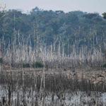 ปล่อยให้ป่าฟื้นตามธรรมชาติ อาจเป็นทางเลือกที่ดีกว่าการปลูกป่า