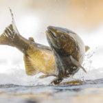 พลังงานแสงอาทิตย์คือทางรอดของปลาอพยพในลำน้ำโขง