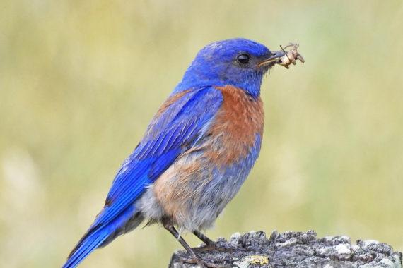 มลภาวะแสงและเสียงส่งผลต่อพฤติกรรมการขยายพันธุ์ของนก