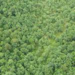 เร่งดำเนินการผนวกพื้นที่อุทยานแห่งชาติแม่วงก์ – คลองลาน เข้าเป็นส่วนหนึ่งของป่ามรดกโลก