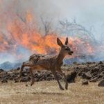 สายพันธุ์พืชและสัตว์กว่า 4,400 ชนิด เสี่ยงต่อการสูญพันธุ์ เพราะไฟป่า