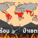 ผลกระทบของโลกร้อนต่อสายพันธุ์ป่าเขตร้อน