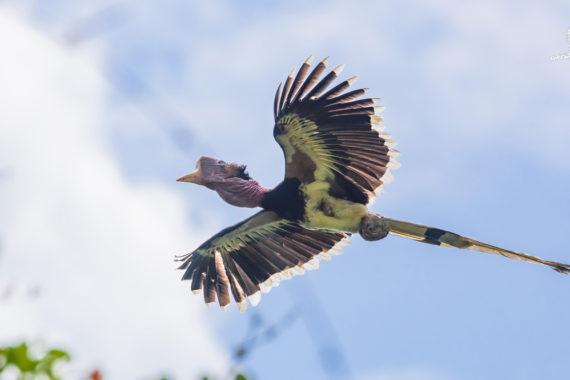 ลำดับเหตุการณ์ผลักดัน 'นกชนหิน' เป็นสัตว์ป่าสงวนลำดับที่ 20 ของประเทศไทย