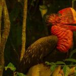 'ทำไมต้องผลักดันนกชนหินเป็นสัตว์สงวน' กับคำตอบเพื่อนำไปสู่การอนุรักษ์ที่ยั่งยืน
