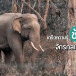 เกร็ดความรู้: ช้างป่า จักรกลแห่งพงไพร