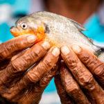ปลาน้ำจืดทั่วโลกราวหนึ่งในสามกำลังเผชิญภาวะใกล้สูญพันธุ์