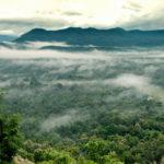 ป่าแม่วงก์ ปราการไพรและเส้นทางเดินสำคัญของสัตว์ป่า