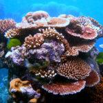 มรดกโลกทางธรรมชาติในทะเลออสเตรเลีย ดูดซับคาร์บอนไดออกไซด์ไว้มากกว่าสองพันล้านตัน