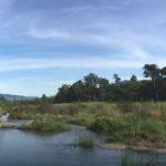 'ห้วยแม่เรวา' สายธารที่หล่อเลี้ยงชีวิตริมน้ำในป่าแม่วงก์
