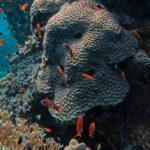 ปะการังฟอกขาว ใกล้ตัวกว่าที่คิด เมื่อทะเลเสียสมดุล แหล่งอาหารหลายร้อยล้านชีวิตจะหายไปด้วย