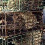โควิด-19 เปลี่ยนพฤติกรรมคนเอเชียเรื่องการบริโภคสัตว์ป่า