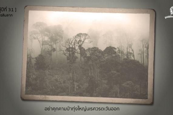 [ก้าวสู่ปีที่ 31] อย่าคุกคามป่าทุ่งใหญ่นเรศวรตะวันออก ใจกลางมรดกโลกของเราเองเลยครับ