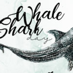 ชวนชมสารคดีขนาดสั้น SHARING OCEANS WITH SHARKS-ทะเลต้องมีฉลาม