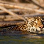 หมื่นสปีชีส์เสี่ยงสูญพันธุ์ พืชและสัตว์ในป่าแอมะซอนกำลังตกอยู่ในอันตราย