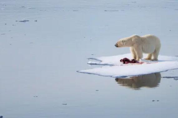 รายงานวิกฤติภูมิอากาศโดย IPCC ระบุ โลกร้อนที่สุดในรอบ 125,000 ปี